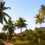 reisebericht golf von thailand, koh chang, provinz, trat, natur, palmen, suedostasien, asien