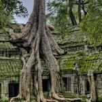 reisebericht kambodscha, taprohm, ankor, ankorwat, siemreap, unesco, weltkulturerbe, sehenswuerdigkeit, tourismus, laracroft, suedostasien, asien