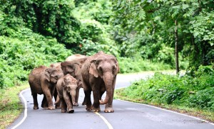 backpacking thailand, welche kosten kommen auf mich zu, khao yai nationalpark, elefant, naturschutz, sehenswuerdigkeit, suedostasien, asien