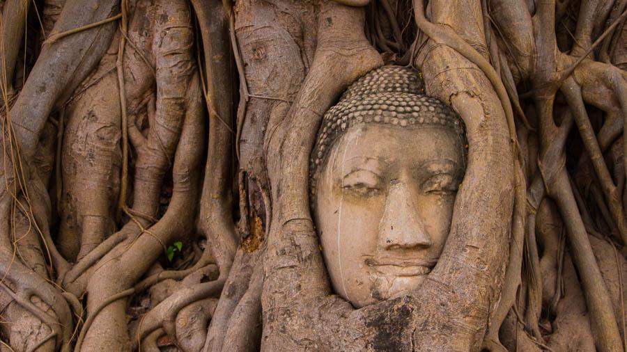 wat-mahathat-buddhabaum-buddhatree-ayutthaya-bangkok-thailand